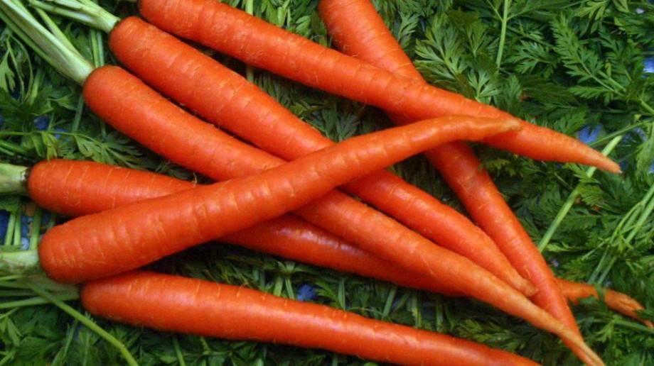 Морковь | компетентно о здоровье на ilive