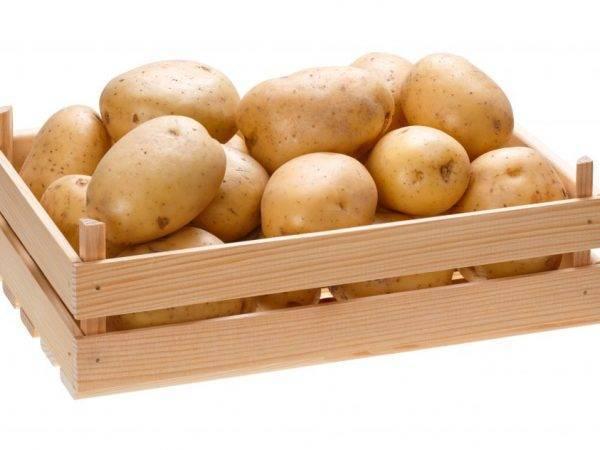 Как хранить картошку в квартире, чтобы пользоваться продуктом долгое время