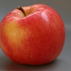 10 самых вкусных сортов яблок на дегустационном марафоне на supersadovnik.ru