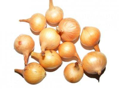 Лук штутгартер ризен: описание сорта, выращивание и уход, посадка под зиму