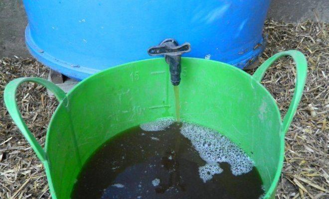 Подкормка огурцов в теплице: эффективные народные средства, первая подкормка огурцов, внекорневая подкормка