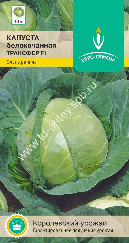 ✅ о капусте трансфер: описание раннего сорта, особенности выращивания - tehnomir32.ru