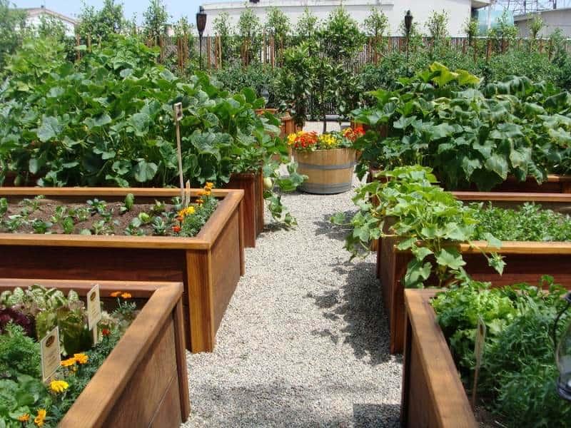Читать книгу грядка для отличного урожая. картофель без химии и хлопот на любой почве игоря лядова : онлайн чтение - страница 1