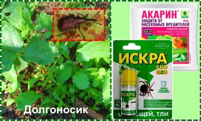 Чем обработать клубнику осенью от вредителей