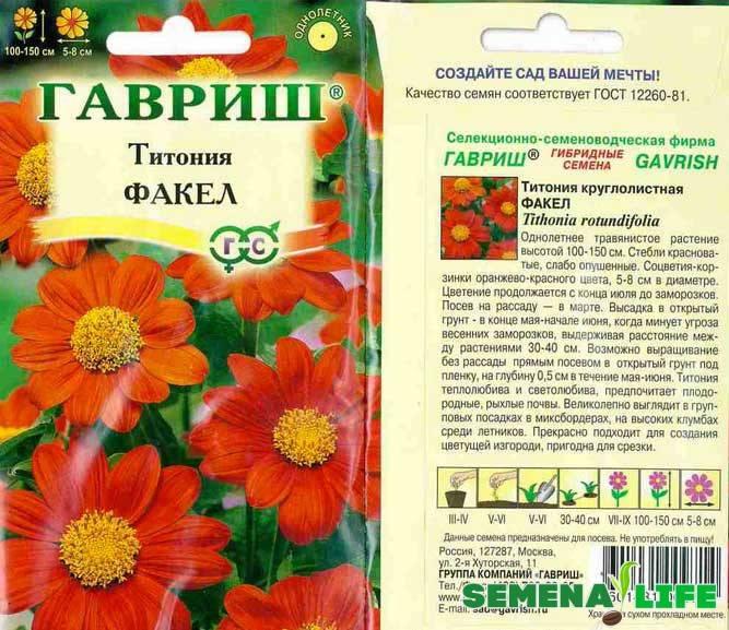 Подробная инструкция по выращиванию титонии из семян