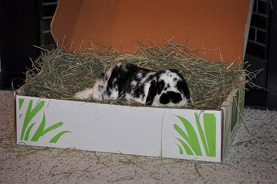 Как сделать сенник для кроликов?