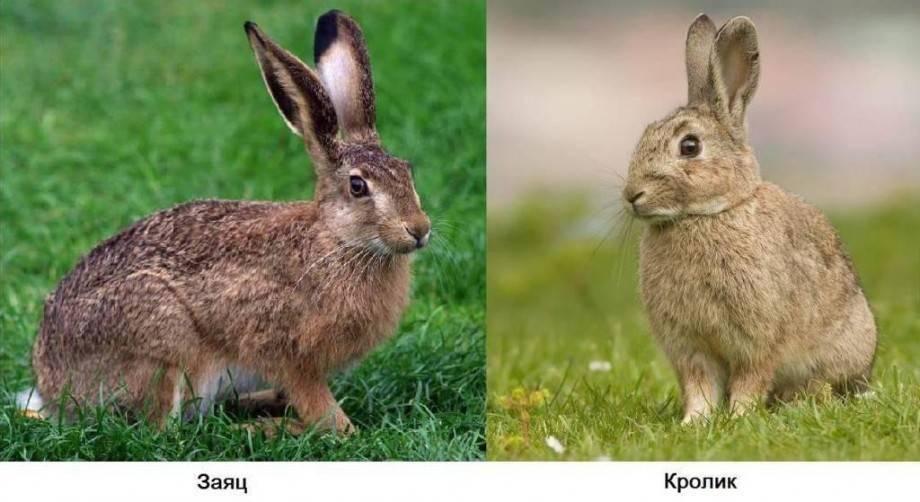 Самые интересные факты о кроликах для детей | zdavnews.ru | zdavnews.ru