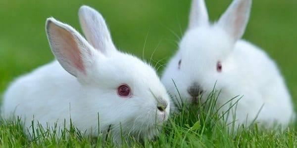 Сколько лет живут кролики в домашних условиях и дикой природе