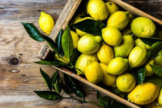 Замороженный лимон — польза и вред