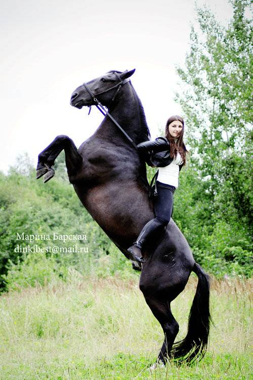 Кабардинская порода лошадей: история кавказских коней, описание внешнего вида, характер и уход
