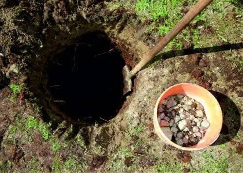 Груша ноябрьская: описание сорта и отзывы садоводов, видео и фото