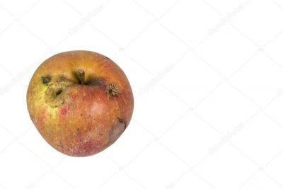 Плодожорка на яблоне - методы борьбы народными средствами