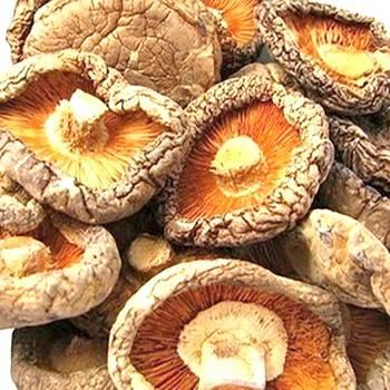 Можно ли сушить польские грибы для хранения и дальнейшего использования в домашней кулинарии?