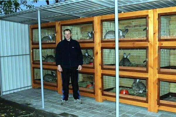 Промышленные клетки для кроликов: обзор, чертежи, размеры