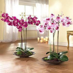 Мини орхидеи «фаленопсис»: описание и уход за карликовым цветком в домашних условиях