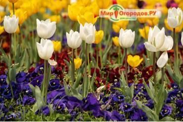 Тюльпаны в подарок – как сохранить свежесть букета долгое время