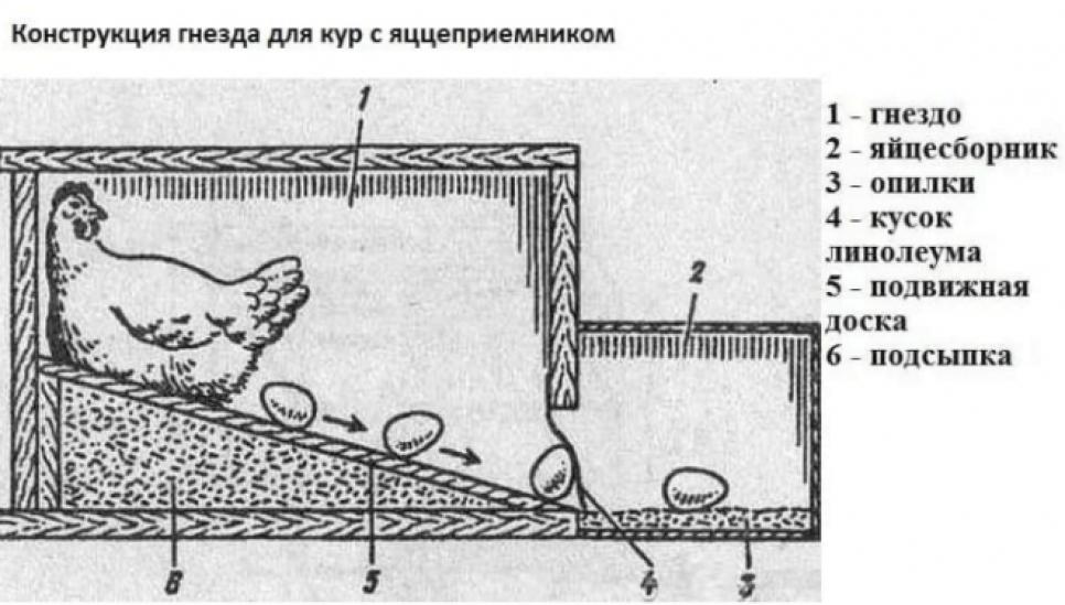 Насесты для кур (34 фото): как сделать насесты для несушек своими руками? размеры, чертежи и оригинальные идеи для правильного изготовления насестов в домашних условиях