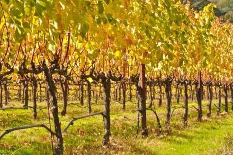 Чем, когда и как обрабатывать виноград осенью перед укрытием на зиму