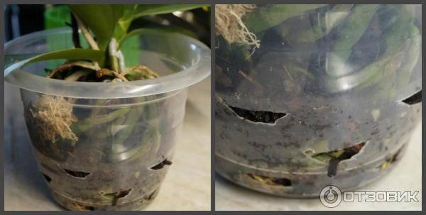Прозрачный горшок для орхидей: обязательно ли нужен именно такой и почему обычно его выбирают, а также можно ли сажать растение в пластиковую емкость?дача эксперт