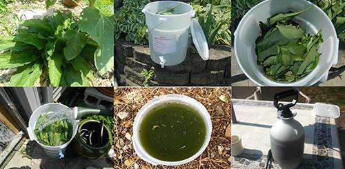 Удобрение из травы для огорода: приготовление и применение, фото и видео
