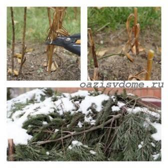 Как ухаживать за лилиями осенью и подготовить их к зиме