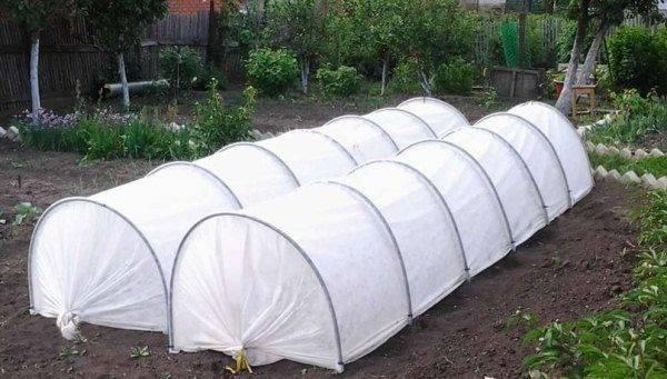 Какую минусовую температуру выдерживает капуста. боится ли овощ заморозков? | зелёный сад