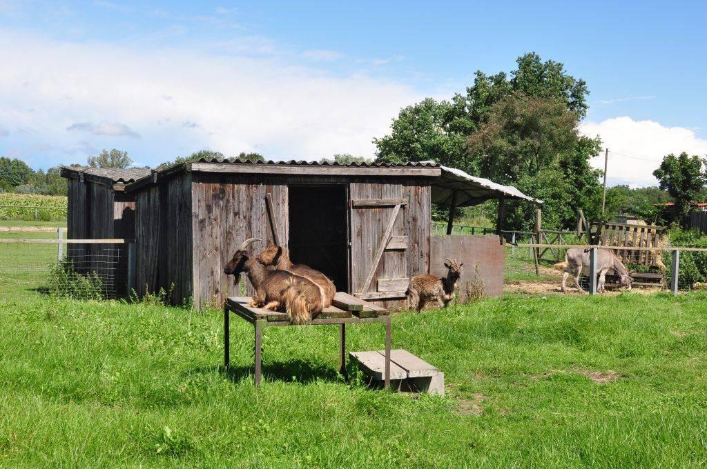 Сарай для коз: фото и аспекты строительства своими руками