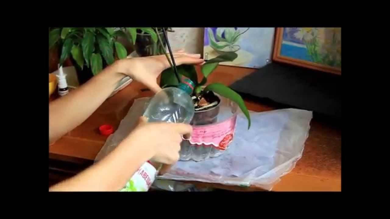 Когда и как лучше пересаживать орхидею в домашних условиях и как часто нужно это делать
