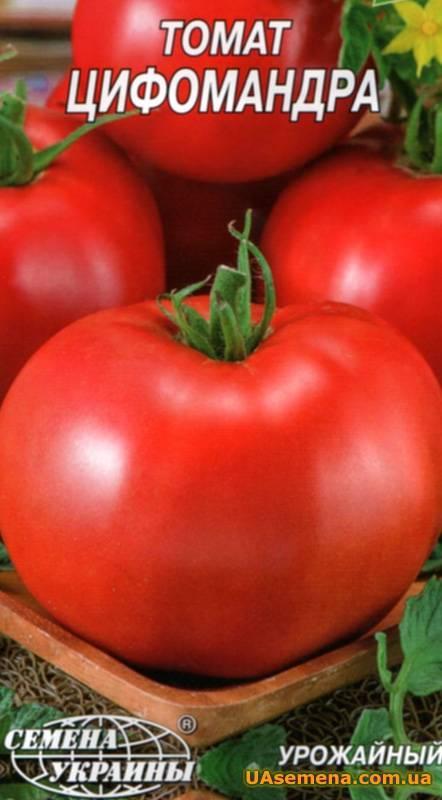 Описание и особенност выращивания томатного дерева цифомандра