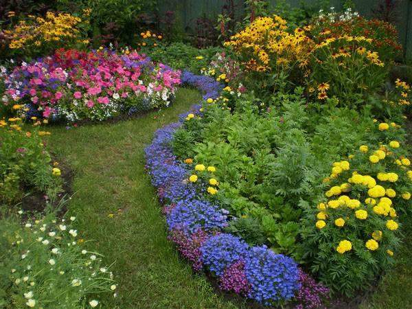 Рабатка: схемы посадки цветов, цветы на даче, однолетники,