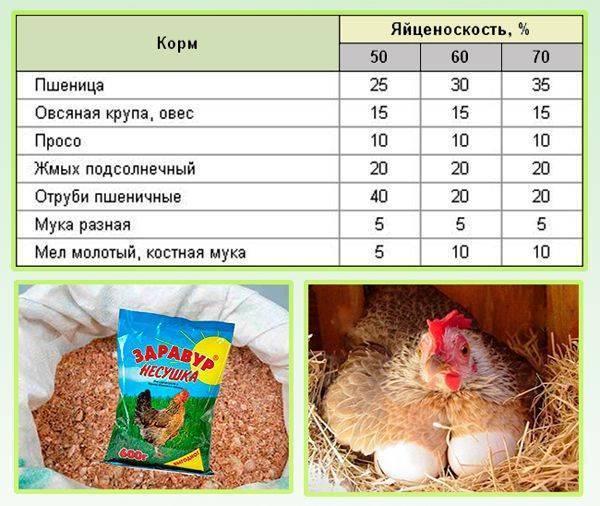 Яйценоскость кур: как повысить в домашних условиях, простой рецепт, необходимые меры для увеличения