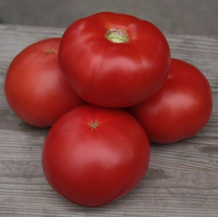 Томаты кибо f1: характеристика сорта и особенности выращивания. характеристика и описание сорта томата кибо, его урожайность