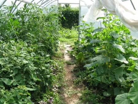 Соседство овощей в огороде таблица, совместимость культур, фото и видео