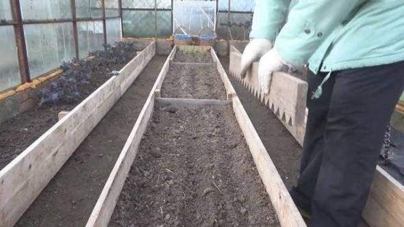 Бизнес выращивание редиса - бизнес-план с расчетами