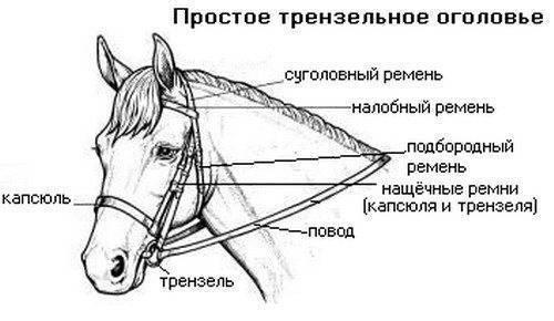 Уздечка и недоуздок для лошади как сшить своими руками, фото