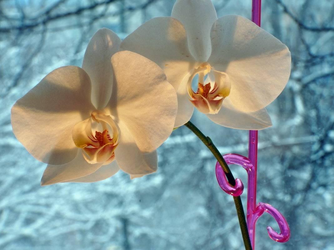 Какой водой поливать орхидею в домашних условиях: советы от профессионалов
