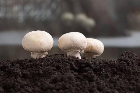 Выращивание вешенок: пошаговая инструкция и описание что нужно для выращивания (115 фото)