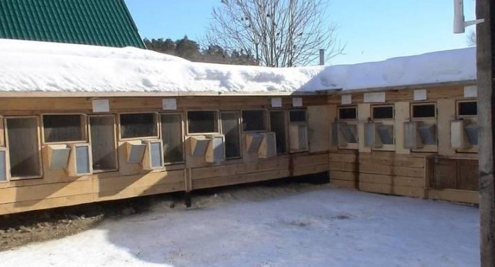 Содержание кроликов зимой: как поить их на улице в зимний период? особенности спаривания. сколько сена нужно кролику на зиму при уличном содержании?