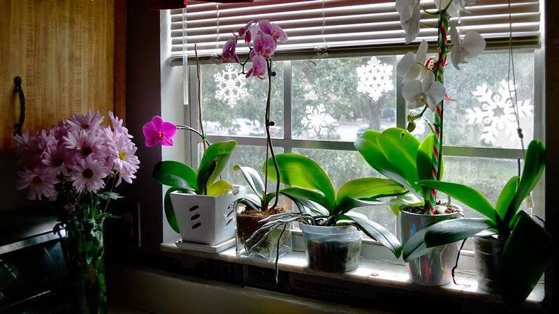 Как правильно поливать орхидею в домашних условиях: в горшке, пошагово