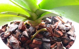 Полив орхидей в домашних условиях: 5 правил
