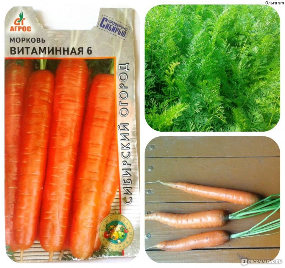 Как увеличить сладость моркови и чем ее подкормить для этого?