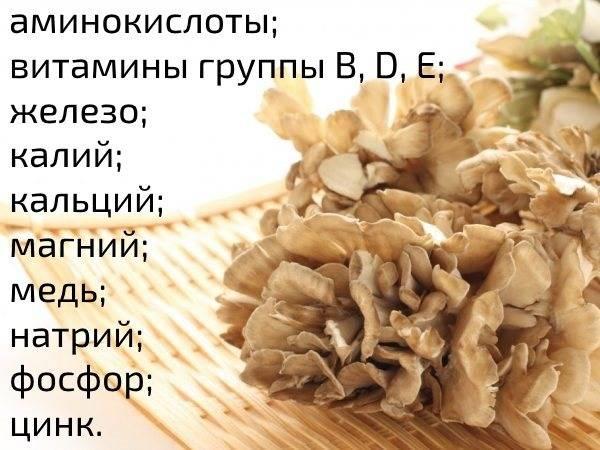 Описание и лечебные свойства гриба-барана