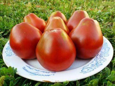 """Томата """"груша розовая"""": характеристика и описание сорта помидор с фото, отзывы об урожайности"""