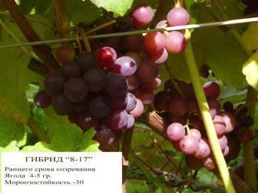 Каталог сортов винограда
