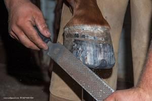 Зачем лошадям нужны подковы и как правильно подковать?