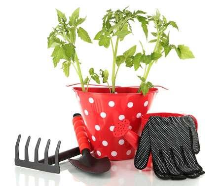 Как подкормить рассаду томатов и перца йодом?