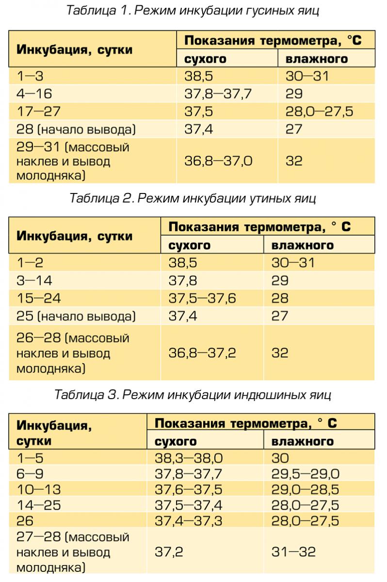 Каким должен быть режим инкубации индюшиных яиц: подробная таблица