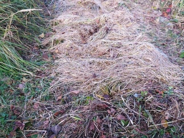 Что такое мульчирование почвы и где взять мульчу