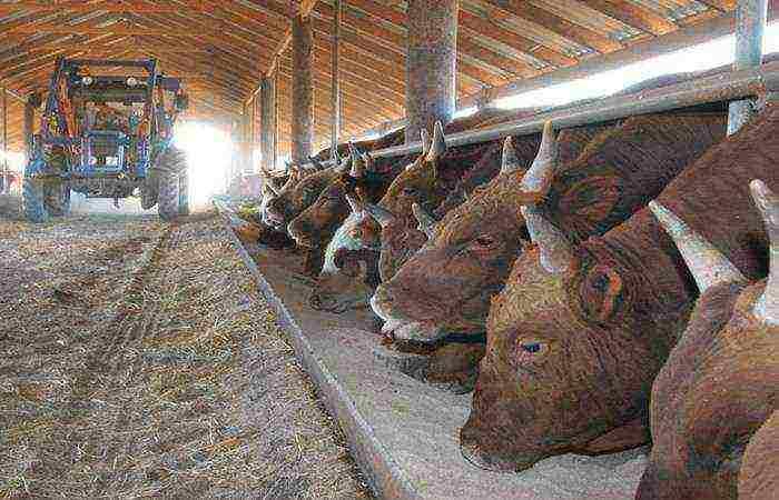 Как забить и разделать корову или быка?