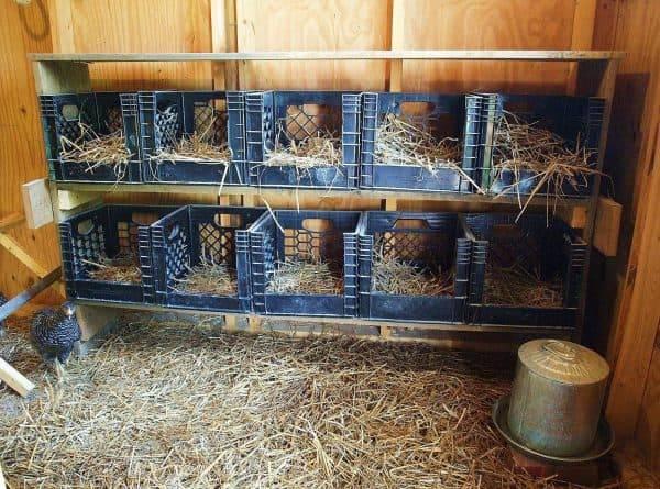 О строительстве индюшатника своими руками: размеры брудера, гнезда и поилки